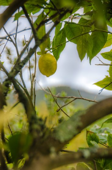 komkommertijd_citroen (1 of 1)